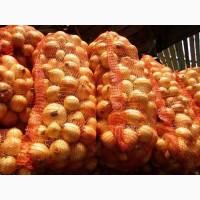 Куплю 100 тонн сухого качественного лука