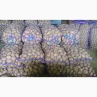 Продам картофель на экспорт