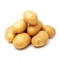 Продажа Картофеля крупным оптом от 60 до 100 кг