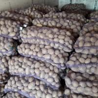 Продам товарный картофель отличного качества дешево