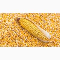 Купуємо кукурузу