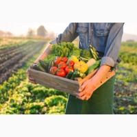 Выращиваем МОРКОВЬ сетевого качества в обьеме