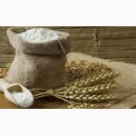 Продам канадскую пшеницу сорт Тесла, Днепропетровская обл