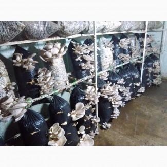 Маринованные грибы вешенка для ресторанного бизнеса