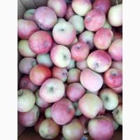 Продам элитные яблоки оптом урожай 2018 года