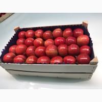 Польские яблоки разных сортов