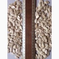 Продам семена тыквы калибры 7-9; 9-12; 10-12; 11+; 12