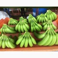 Бананы оптом из Эквадора