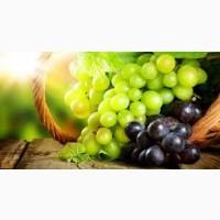 Продаю технический виноград