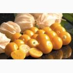 Продаем физалис земляничный, ананасный без расфасовки