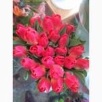 Продам голландские тюльпаны от производителя! Опт