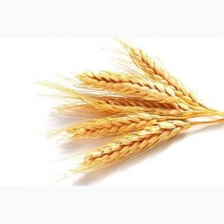 Купим пшеницу. Вся Украина