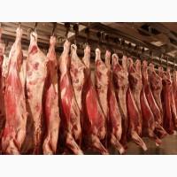 Продажа мяса говядины