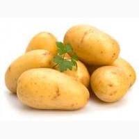 Экспорт картофеля, продам картофель разных сортов