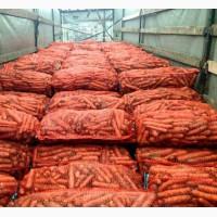 Морковь продаж оптом