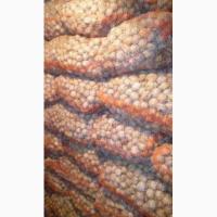 Продам грецкий орех урожай 2018