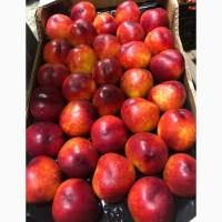 НЕКТАРИНЫ. Косточковые фрукты. Производство Испания