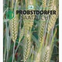 Семена озимой пшеницы Галлио, Адессо, Роланд, Мидас, Балатон (Австрия)