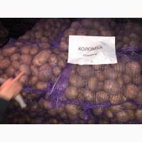 Продам посадочный и товарный картофель! Лучшее качество