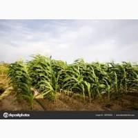 Закупим пшеницу 2021 года по всей Украине