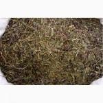 Очанка коротковолосистая, трава
