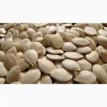 Посевной материал тыквы семена Украинская многоплодная, волжская серая