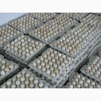 Яйце інкубаційне Росс-308