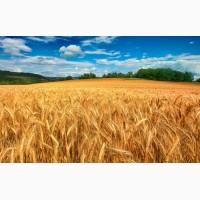 Куплю Пшеницу с места от 100т по Харьковской обл
