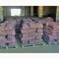 Продам картофель сорт бела роса