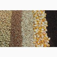 Продажа зерна и зерновых. Пшеница, Кукуруза