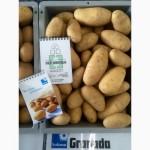 Продаю семенной картофель класса Е и А. Продам картошку / картопля