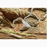 Закупаем зерновые, масляничные и прочие культуры
