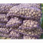 Продажа картофеля оптом с места