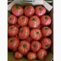 Продам тепличный розовый помидор (Украина)