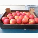 Яблоки из Польши, Свежие яблоки