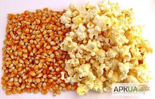 купить сухие зерна кукурузы для попкорна