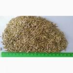 Мелкое зерно овса
