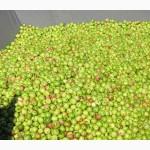 Консервний Завод закуповує яблука для переробки