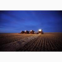 Закупаем пшеницу фуражную. Самовывоз