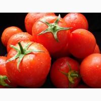 Торговій компанії потрібні оптові постачальники помідорів, г. Киев