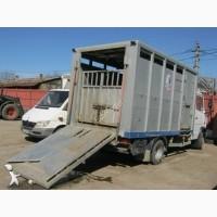 Закупівля ВРХ (бики, корови) в Кіровоградській області