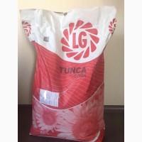 Семена подсолнечника Тунка ЛГ (Tunca LG)