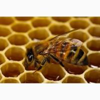 Куплю мёд оптом без анализов (Антибиотик)