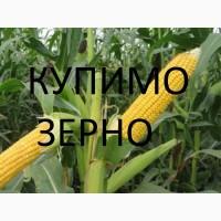 Закуповуємо дорого відходи кукурудзи (вологу кукурудзу, чи не кондицію)