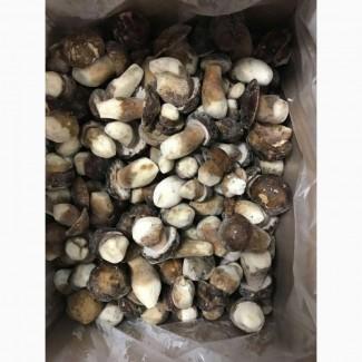 Продаємо високоякісний свіжий, сушений, заморожений білий гриб (карпатський)