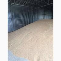 Продаем озимую пшеницу