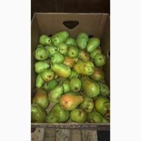 Продам груши из своего сада сорта - Ноябрьская и Рикс