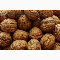 Закупаем оптом грецкий орех нового урожая