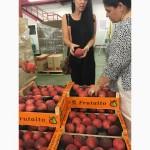 Продаем персики из Испании