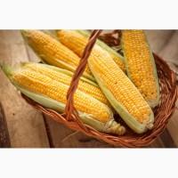 Закупаем кукурузу по всей Украине. Высокие цены, самовывоз, предоплата, І форма